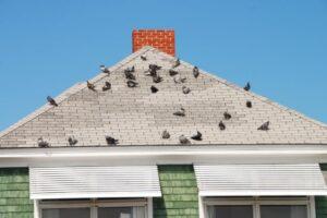 vogelnest verwijderen